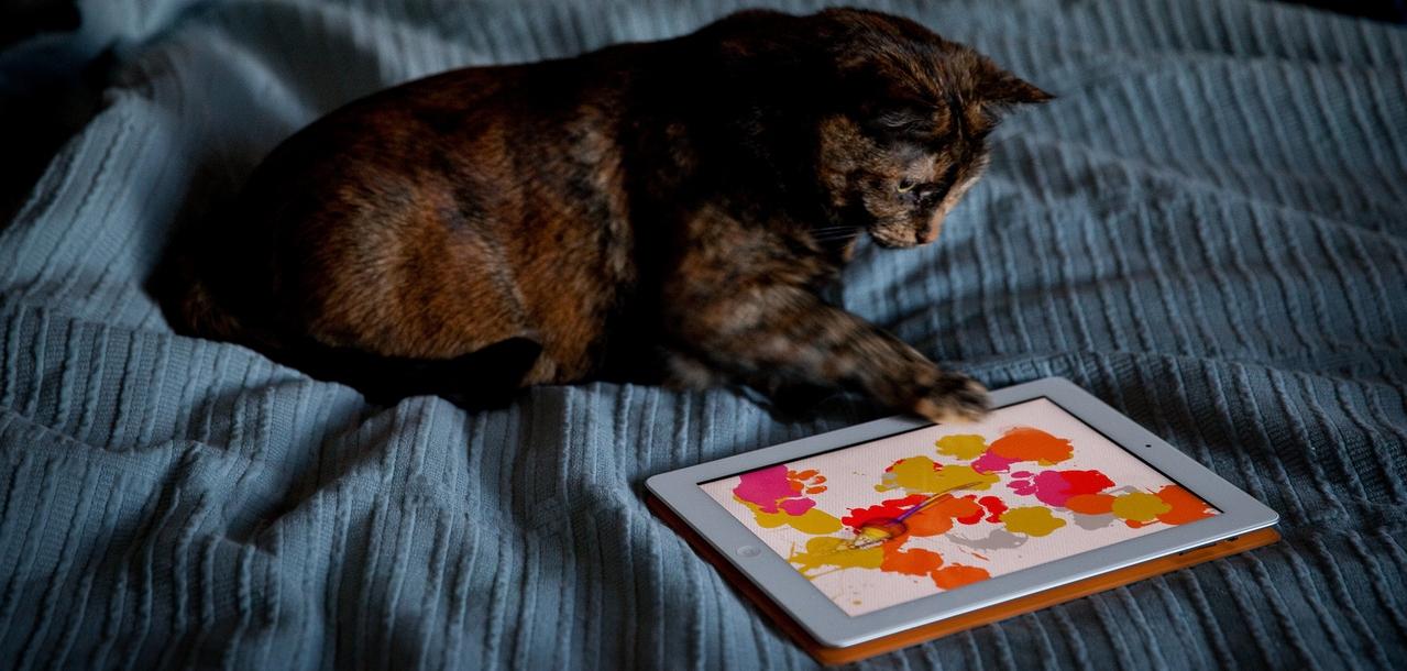 topappli les 3 meilleures applications pour votre chat. Black Bedroom Furniture Sets. Home Design Ideas